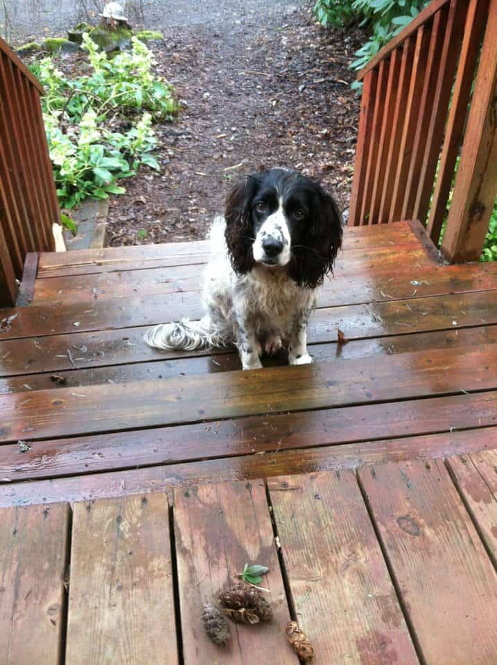 CorkSport-Pet-Profile-Jen-Jemma-Dogs-3