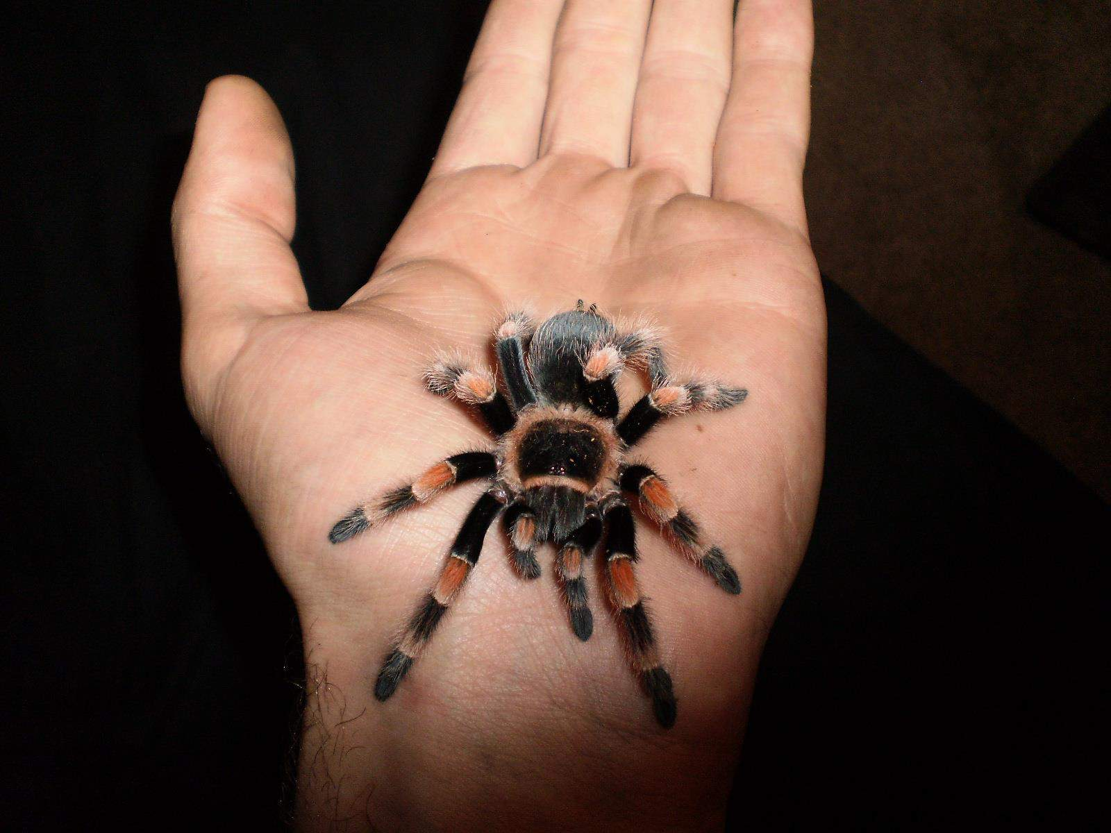 CorkSport-Pet-Profile-Tarantula-Matt-Dogs